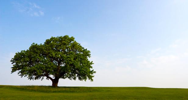 Treewellness